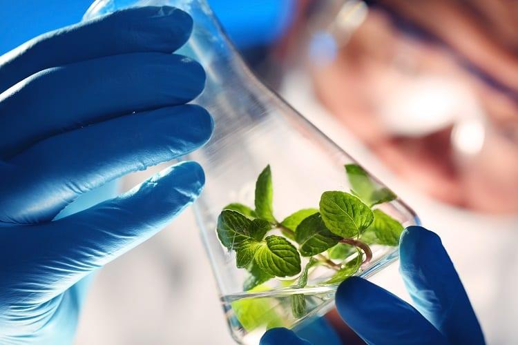 Taking A Closer Look At Bioengineering