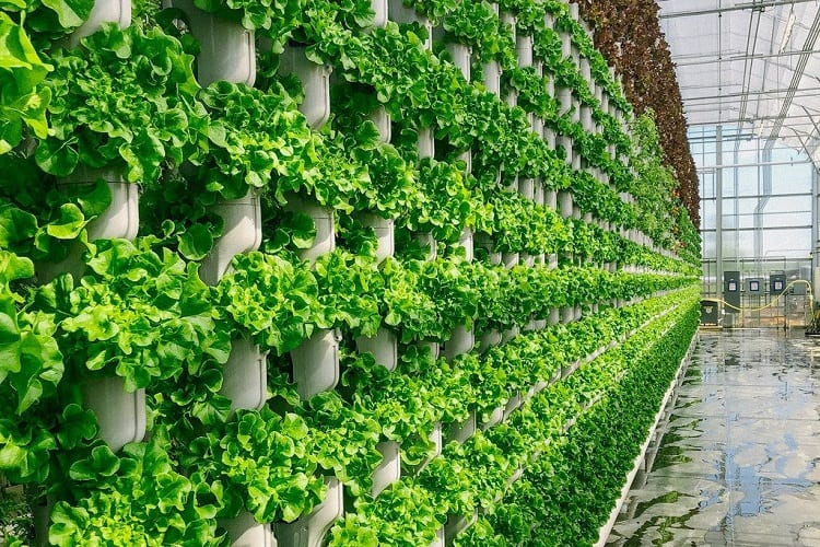 How Biotechnology Has Improved Farming And Modern Agriculture