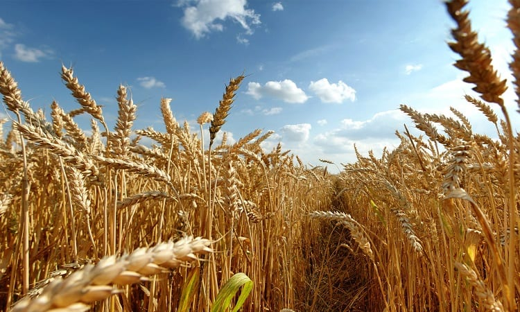 How Did Biotechnology Come Close To Solving The World Hunger Problems